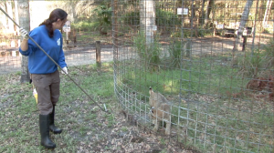 Big Cat Rescue Intern Cleaning Small Cats