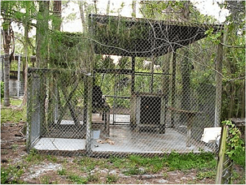 Most big cats endure squalid conditions