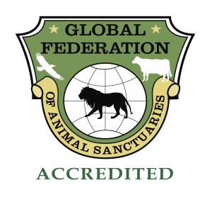 Big Cat Rescue is accredited by the Global Federation of Animal Sanctuaries