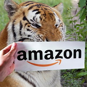 Amazon Smile Tiger