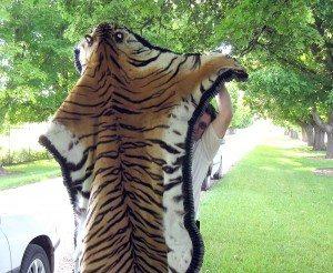 Teenager Steals Tiger Pelt Daly Mansion