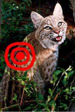 End the killing of big cats in cages for sport