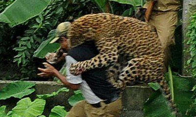 Big Cat Attacks 2006 2010
