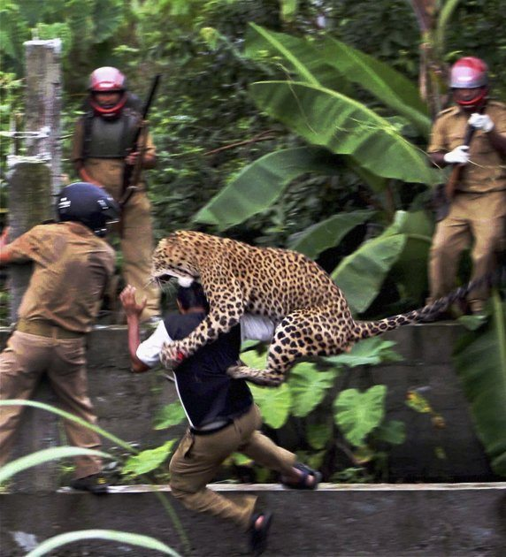 Leopard Mauls Six People