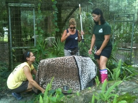 Chrissy, Barbara and Jennifer w/ Sassy Caracal