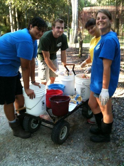 Volunteers and Interns Feeding Big Cats