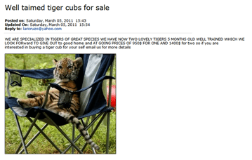 Giving Away Tiger Cubs