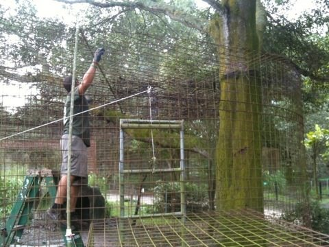 Jarrod Paining Tiger Cages After Clearing off Debris