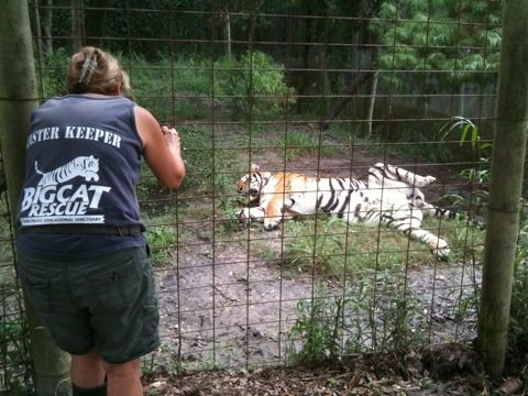 Master Keeper Barbara Frank's Birthday gift from tigers