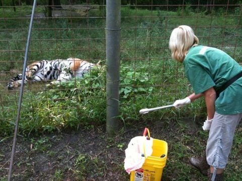 Marie cleaning tiger cage with bar-be-cue tongs