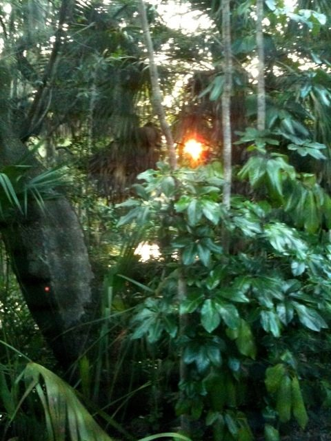 Sunset in the garden of Eden