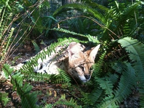 Another beautiful September morn and elegant Serval to enjoy it
