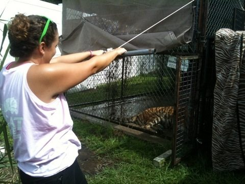 Big Cat Rescue President, Jamie Veronica, trying to trick Modnic into transport