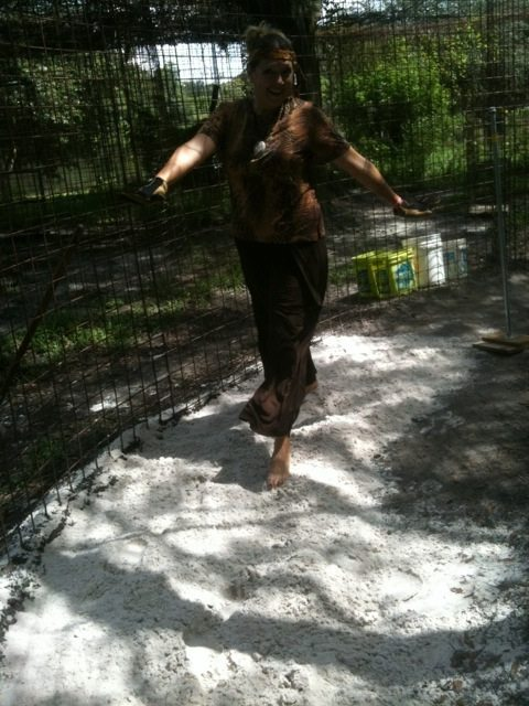 Big Cat Rescue CEO checks out the tracking capacity of sand in tiger enclosures