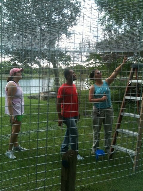 Jennifer, Darren and Amanda helped until 8 pm to get the tiger enclosure roofed