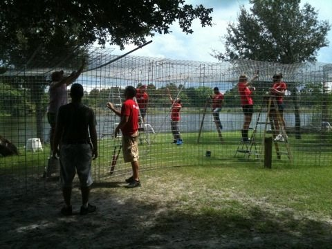 A bunch of new Red Shirt Volunteers help build tiger cage