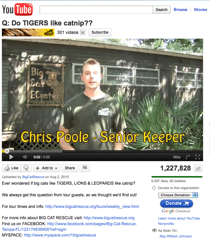 Do Big Cats Like Catnip Video Airs in Houston