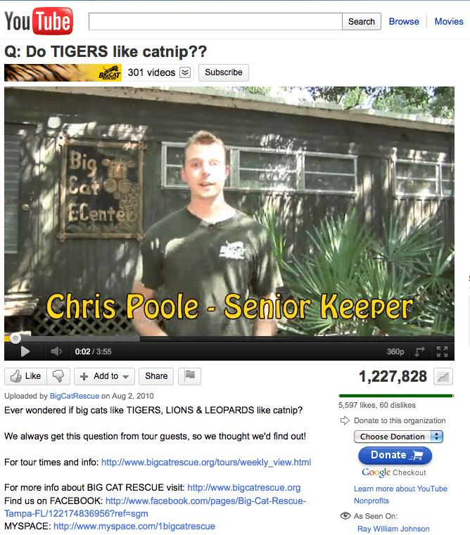 Do Big Cats Like Catnip Video Airs in Houston
