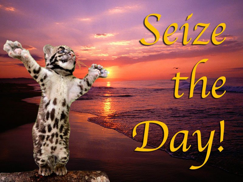 Seize The Day! Carole's wallpaper is a reminder to make each day a masterpiece
