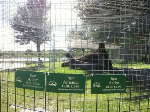 New cage and signs for Amanda, Arthur and Andre Tigers