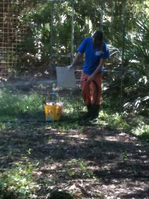 Big Cat Rescue Intern Marnell cleaning water bowls and lock outs