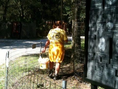 Volunteer Nanci cleaning cougar area