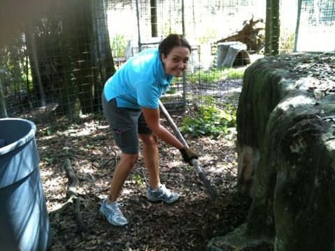 President of Big Cat Rescue adds mulch to the dens for bobcats