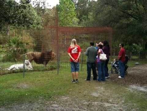 The tour group got to feel the reverberation of Cameron lion's roar