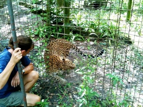 Gale talks to Sundari leopard after weeding her cat-a-tat
