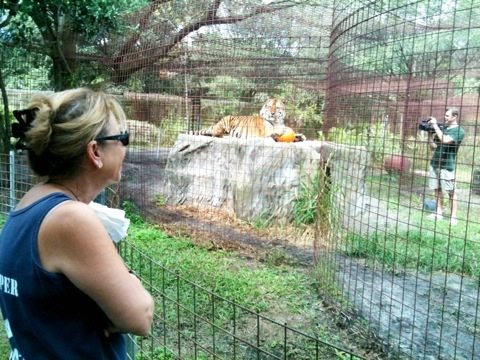 Master Keeper Barbara and Marie watch Alex tiger pose for Chris