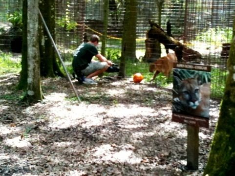 Chris filming Aspen Echo the puma playing soccer with her pumpkin