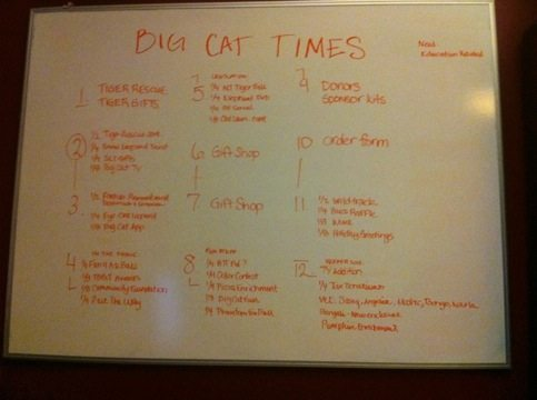 Storyboard for the Big Cat Times layout