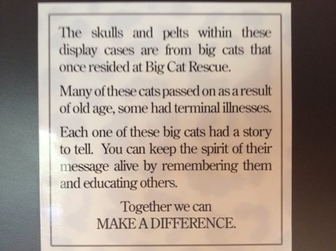 The skins, skulls of deceased cats are used to educate people as to why these great cats should not be used as pets, props or for their parts