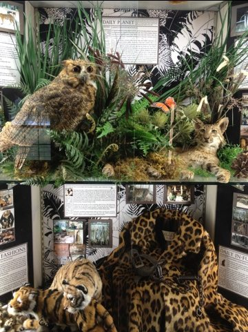 The owl and bobcat were roadkill and the coat donated