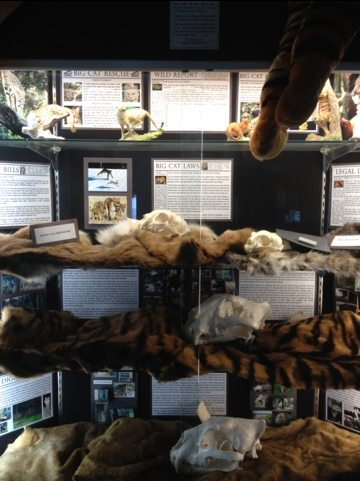 All of our cats in these cases died of old age or from terminal illnesses.  We enabled their stories and message to live on.