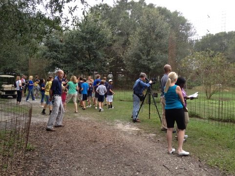 Ch 8 NBC and St Pete Times watch school groups enjoying lions and tigers