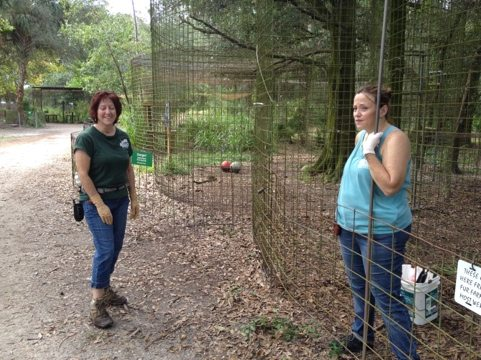 Green Shirt Keepers discuss their day's work cleaning big cats