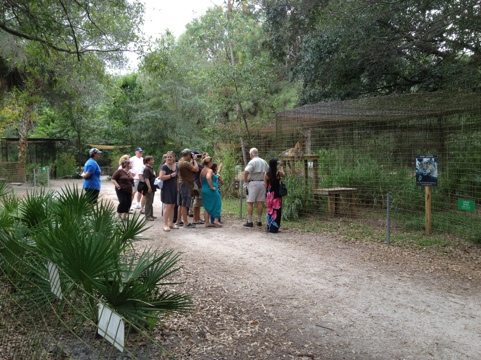 Denny leads the 3 o'clock tour to Simba the leopard
