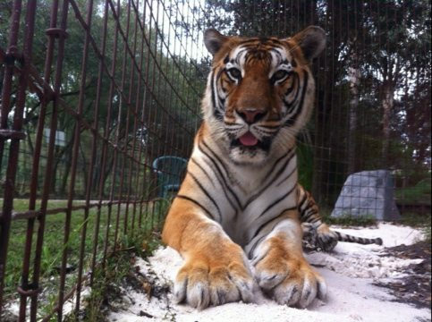 Today at Big Cat Rescue Oct 28