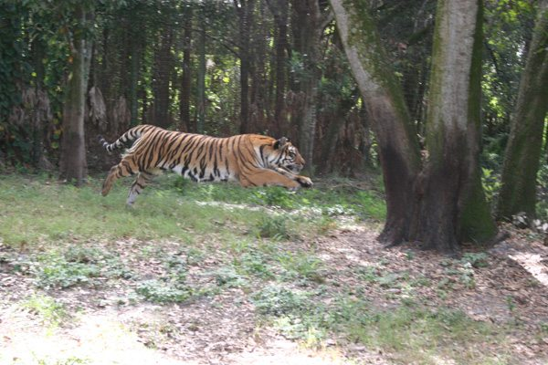 State of Wild Tigers 2016