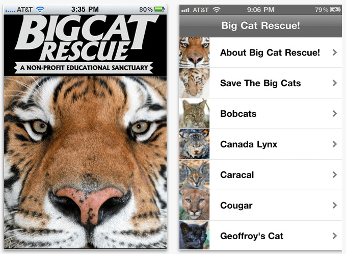 Big Cat App
