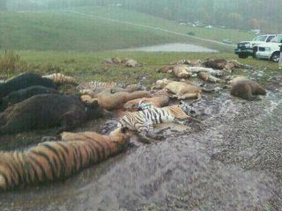 Zanesville Owner Releases Wild Animals Commits Suicide