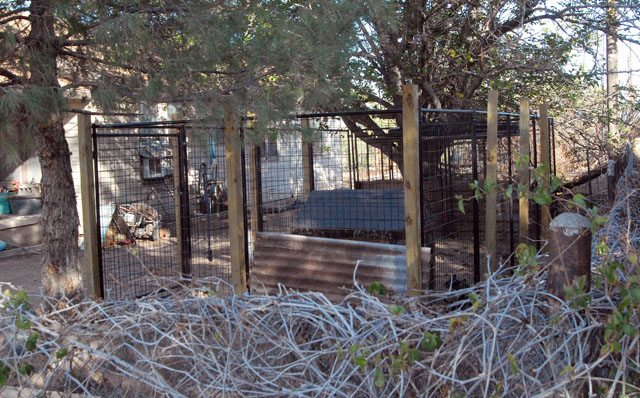 Typical Mountain Lion Cage