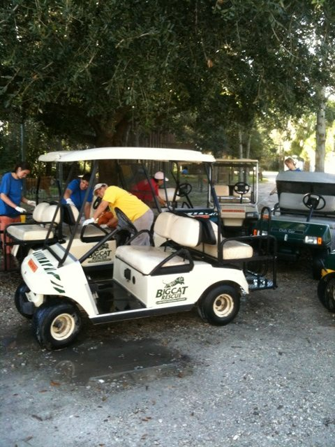 Thursdays are Golf Cart washing days at Big Cat Rescue