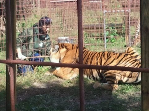Today at Big Cat Rescue Nov 6