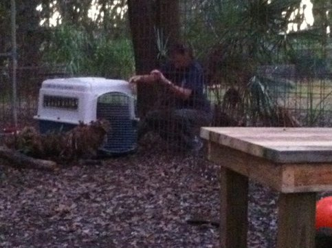Ops Mgr Gale moves Little Dove to be next to Alex the bobcat