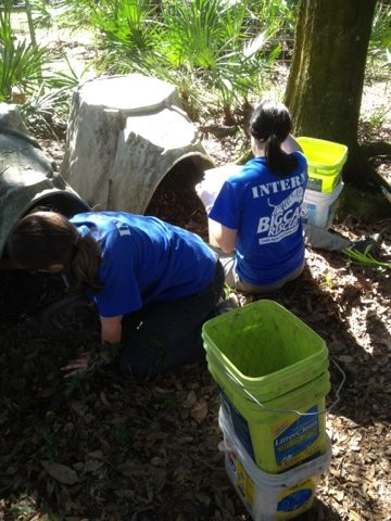 Little Dove gets two dens thanks to interns and volunteers