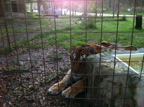 Shere Khan and China Doll pout in their corners after fighting
