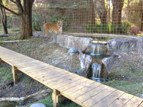 TJ tiger says we should get some water seal on that cat walk