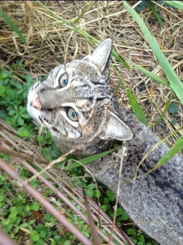 Anasazi the bobcat was being extra sweet this after noon
